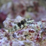 Nano Reef Livestock